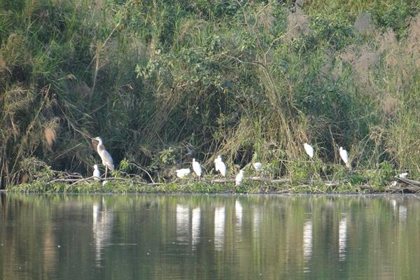 Der Vogelpark Thung Nham - Ninh Binh